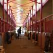 Проект Конюшен в Конно-Спортивном комплексе ЭквитоRUS
